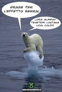 orso su iceberg