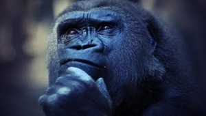 Frase della sera: L'intelligenza della conoscenza